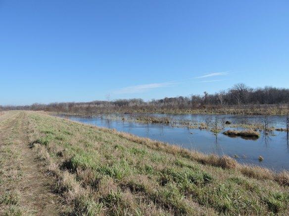 Eagle Marsh.JPG