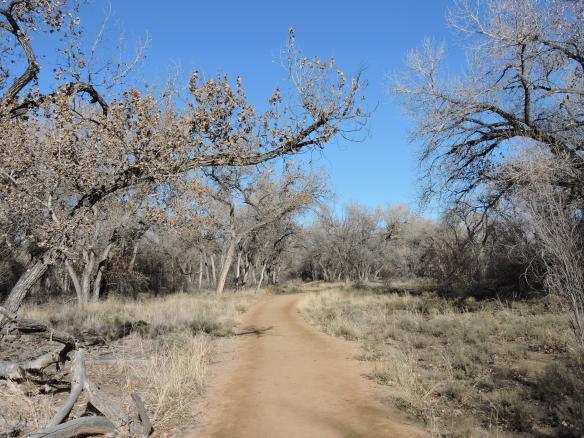 2 - bosque trail